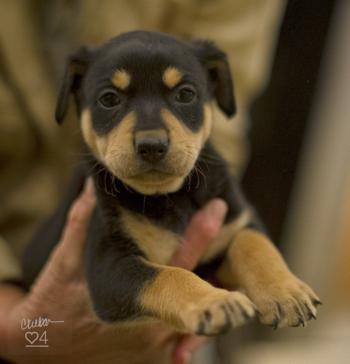 pup in hands